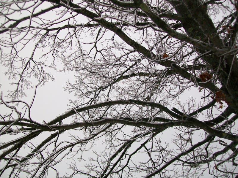 Tempête de pluie verglaçante photo libre de droits