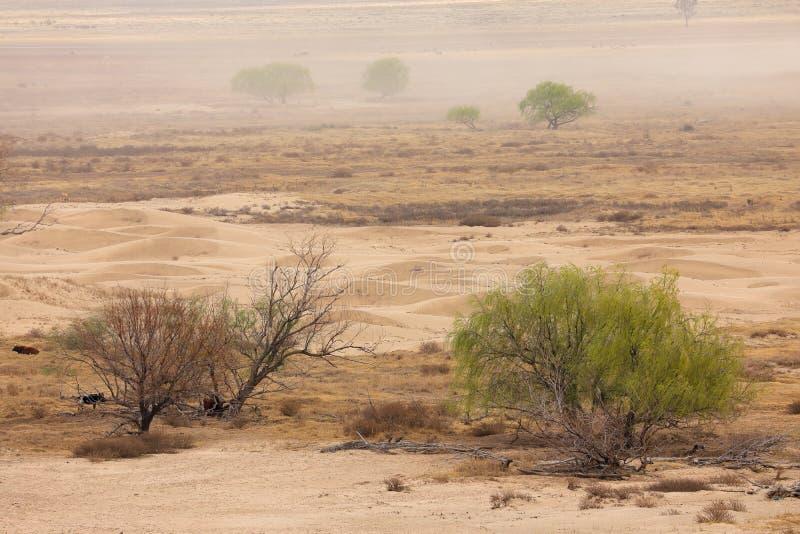 Tempête de poussière dans la plaine stérile image libre de droits