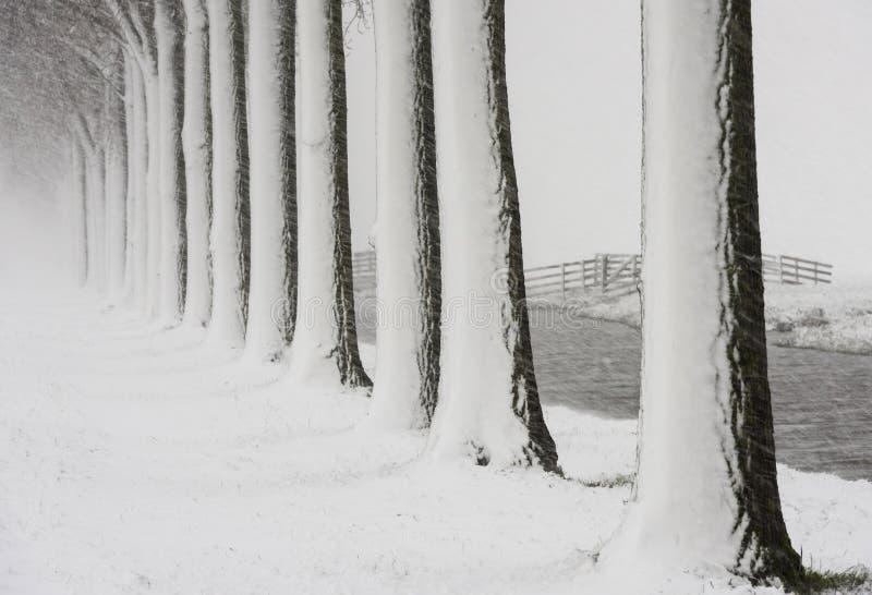 Tempête Noordeloos de neige d'arbres de rangée images stock