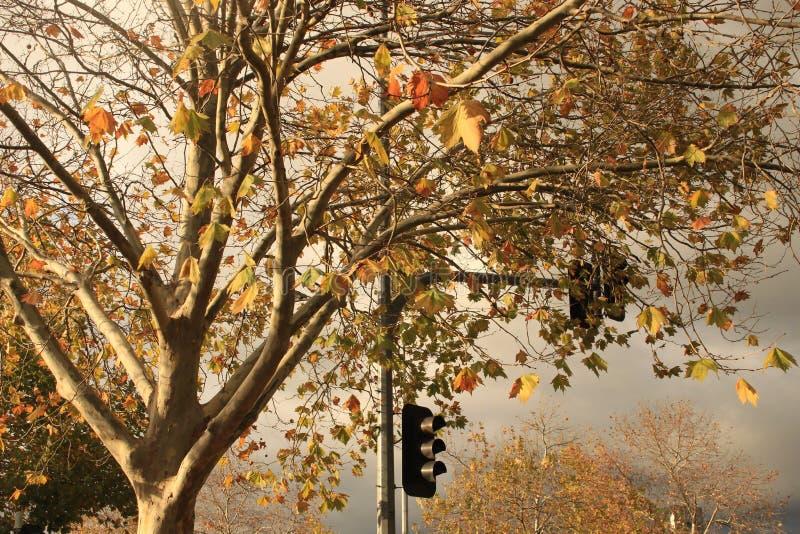 Tempête venant à la ville sur Autumn Day photos libres de droits