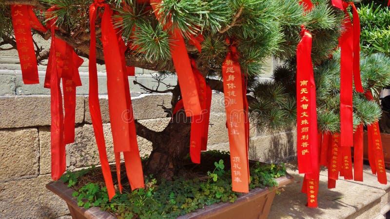 Tempel av Jade Buddha, Shanghai, Kina royaltyfri fotografi