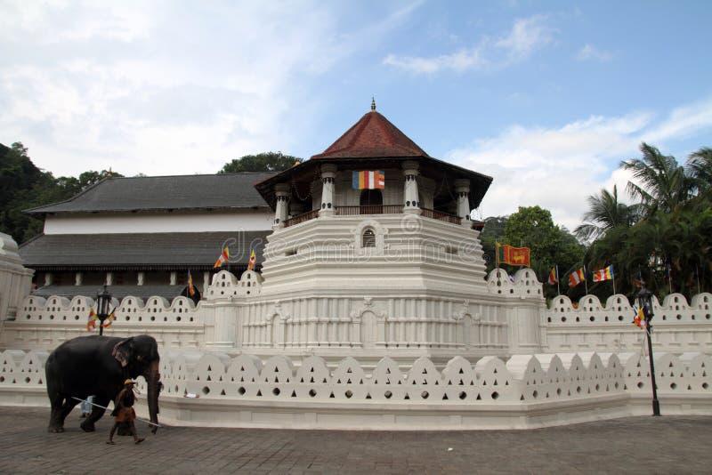 Tempel av tanden i Kandy royaltyfria bilder