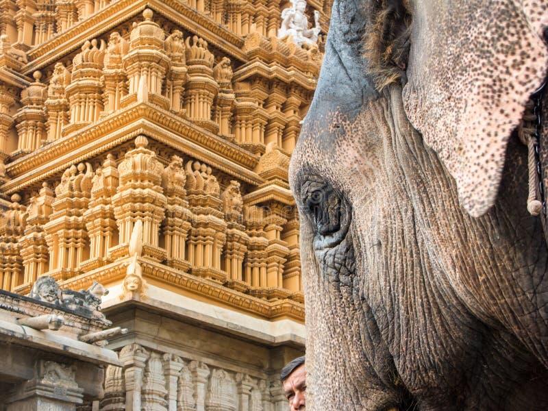 Tempel-Elefant, Nanjangud lizenzfreie stockfotos