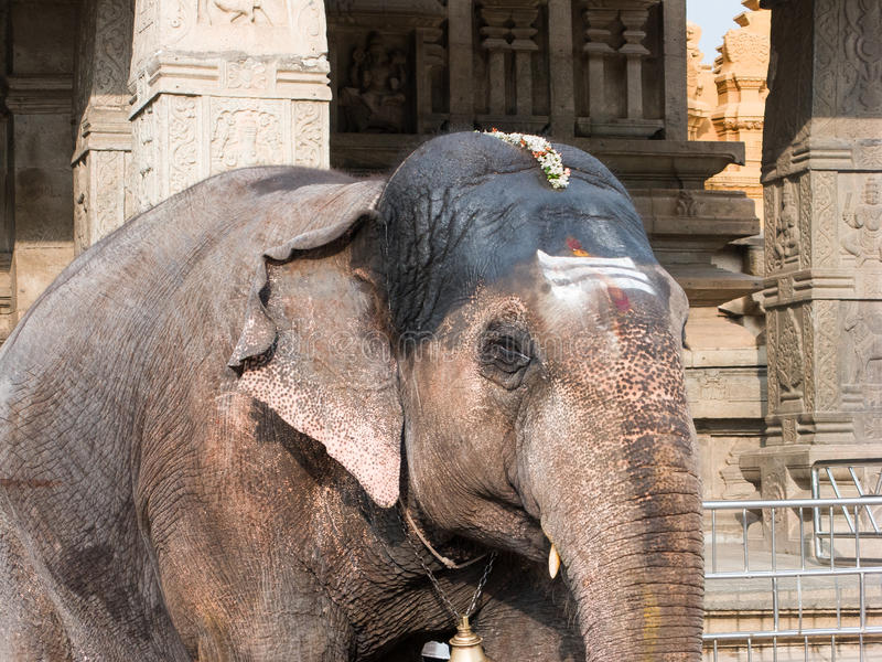 Tempel-Elefant, Nanjangud lizenzfreies stockfoto