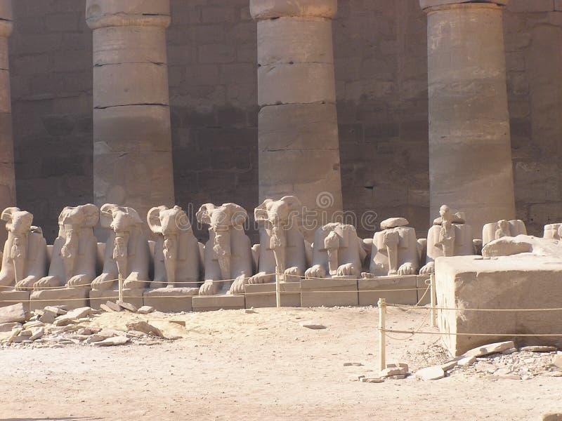 tempel för africa egypt karnaksphinxes arkivfoto