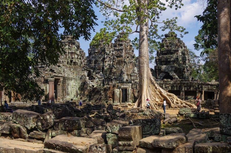 Tempel för Ta Prohm, Angkor område, Siem Reap, Cambodja royaltyfri foto