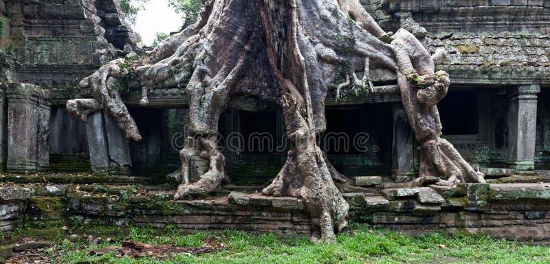 Tempel för Ta Prohm i Angkor Wat royaltyfria foton