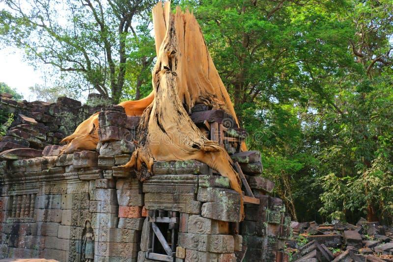 Tempel för Ta Prohm i Angkor Wat, Cambodja royaltyfria foton