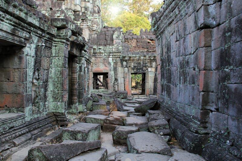 Tempel Ta Phrom i Cambodja arkivbilder
