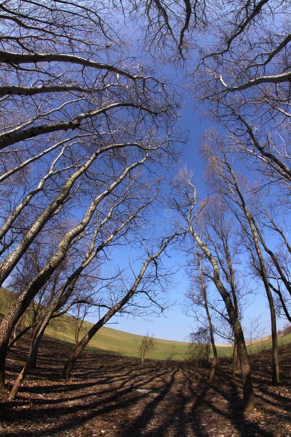 Tempel van bomen stock afbeelding