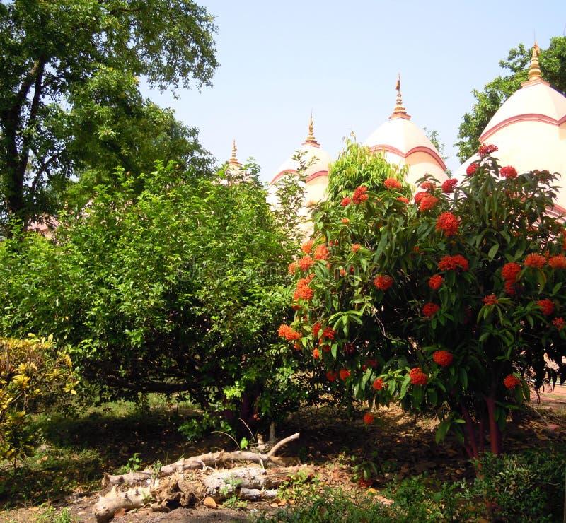 Tempelhoofden die door bomen en installaties met oranje bloemen piepen stock afbeelding
