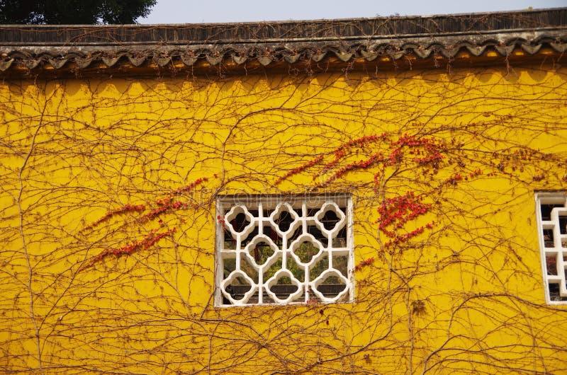 Tempelmuur, met wijnstokken, Klimop wordt behandeld die stock afbeeldingen