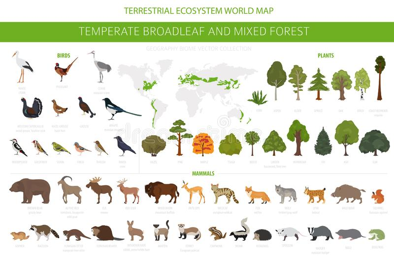 Temperate broadleaf forest and mixed forest biome. Terrestrial ecosystem world map. Animals, birds and plants graphic design. Vector illustration stock illustration