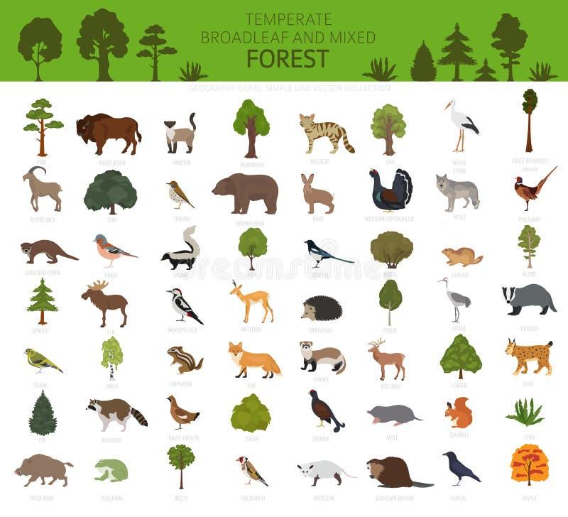 Temperate broadleaf las i mieszany lasowy biome Ziemnego ekosystemu ?wiatowa mapa Zwierząt, ptaków i rośliien graficzny projekt, ilustracji