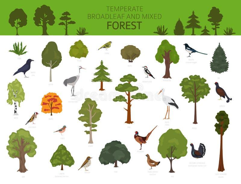 Temperate broadleaf las i mieszany lasowy biome Ziemnego ekosystemu ?wiatowa mapa Zwierząt, ptaków i rośliien graficzny projekt, ilustracja wektor