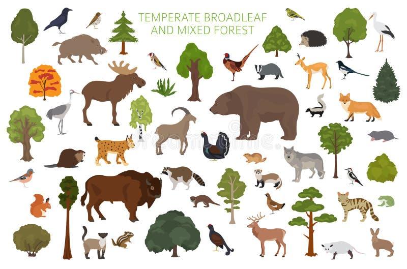 Temperate broadleaf las i mieszany lasowy biome Ziemnego ekosystemu ?wiatowa mapa Zwierząt, ptaków i rośliien graficzny projekt, royalty ilustracja
