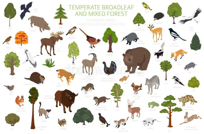 Temperate broadleaf las i mieszany lasowy biome Ziemnego ekosystemu ?wiatowa mapa Zwierzęta, ptaki i rośliny ustawiający, 3D isom ilustracja wektor