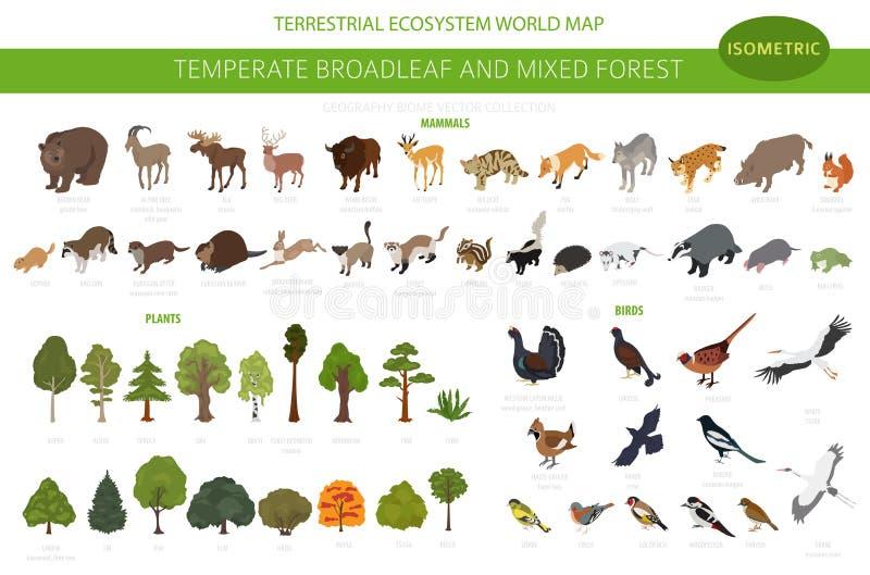 Temperate broadleaf las i mieszany lasowy biome Ziemnego ekosystemu ?wiatowa mapa Zwierzęta, ptaki i rośliny ustawiający, 3D isom royalty ilustracja