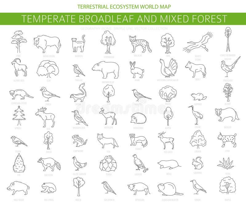 Temperate broadleaf las i mieszany lasowy biome Ziemnego ekosystemu ?wiatowa mapa Zwierzęta, ptaki i rośliny ustawiający, Prosty  ilustracja wektor