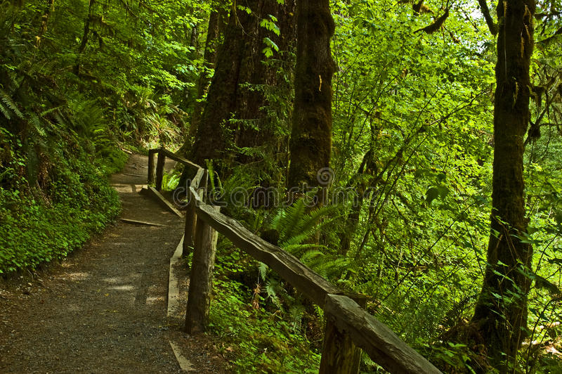 Download Temperate rain forest stock image. Image of coast, wooden - 9682673