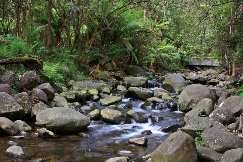 Download Temperate Rainforest Creek stock photo. Image of bush - 3795718