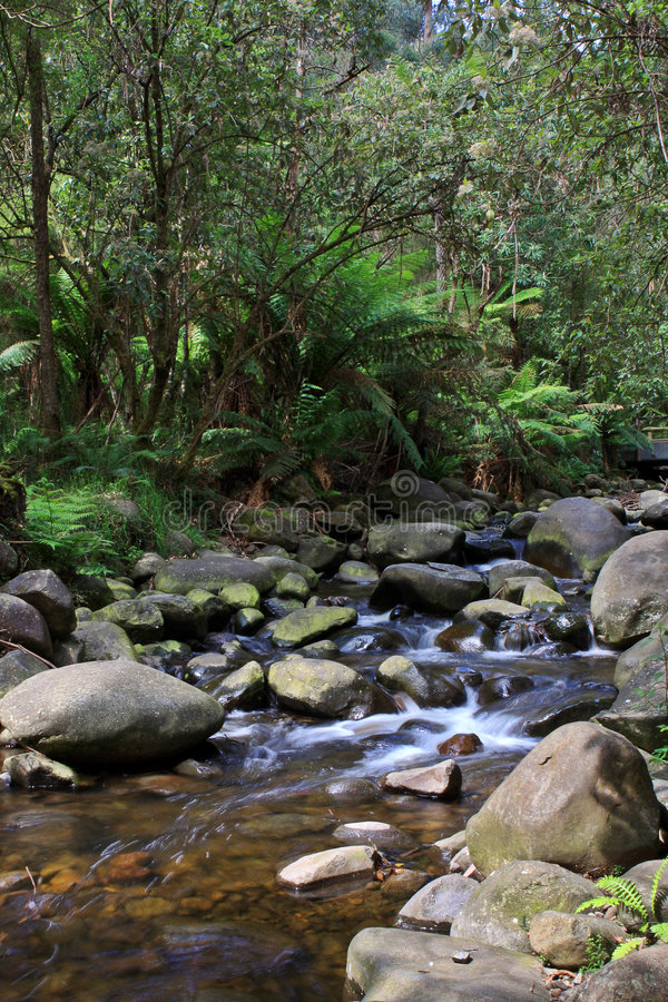 Download Temperate Rainforest Creek stock photo. Image of healesville - 3795728