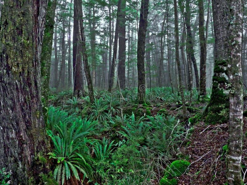 Temperate Rainforest stock photo