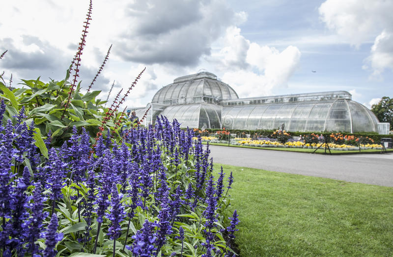 The temperature house, the skies and violet flowers, Kew Gardens. This image shows the temperature house at Kew Gardens in London on a sunny day. There are royalty free stock images