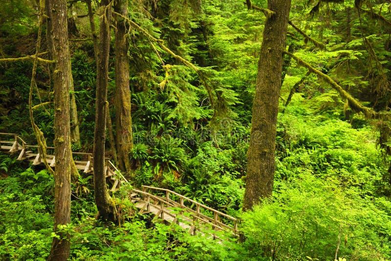 tempererad banarainforest royaltyfria foton