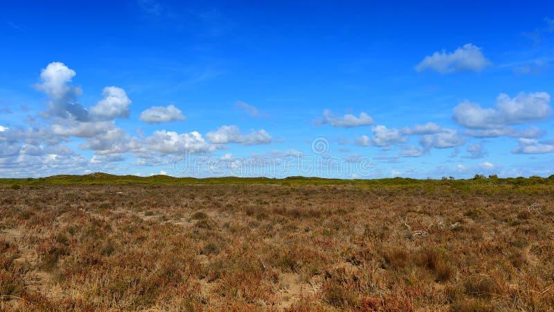 Tempererad grässlätt nära Cervantes arkivfoto