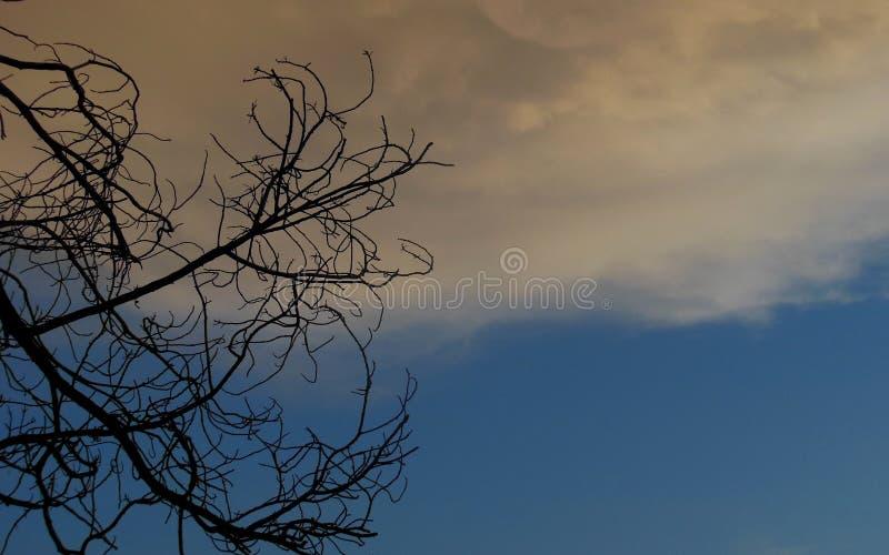 Tempesta che fa sopra l'albero morto immagini stock