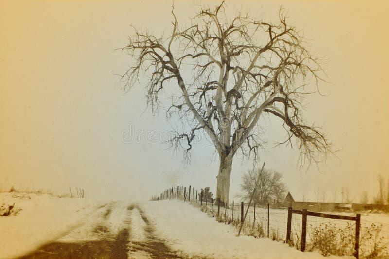 Tempesta di Colorado di mattina fotografia stock libera da diritti