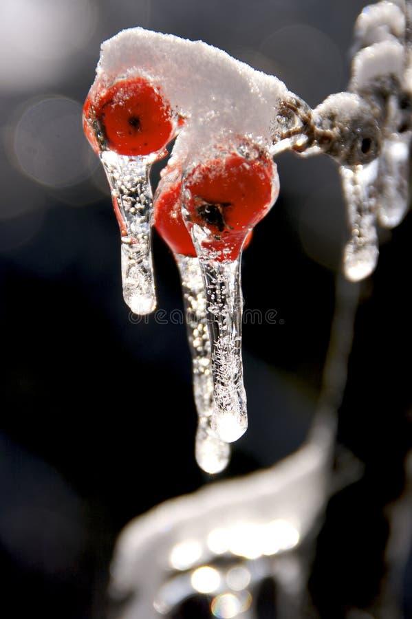 Tempesta di ghiaccio e della neve immagini stock libere da diritti