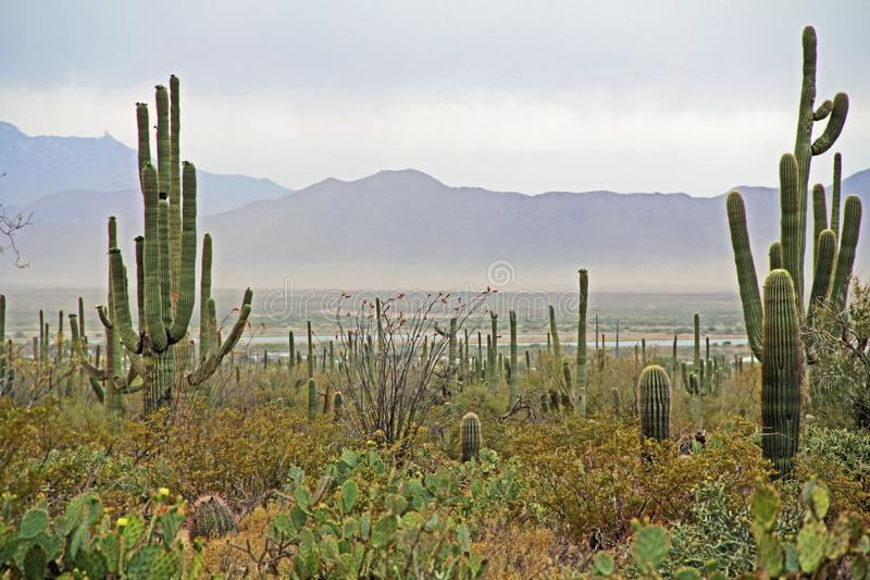 Tempesta di sabbia vicino al parco nazionale del saguaro fotografia stock libera da diritti