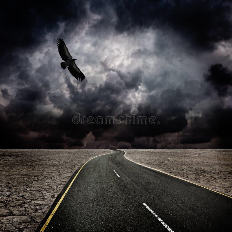 Tempesta, uccello, strada in deserto
