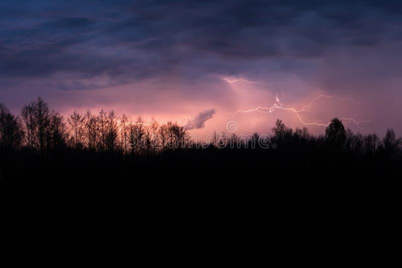 Tempestade colorida do trovão do verão sobre a floresta na noite Greves de iluminação espetaculares no céu foto de stock