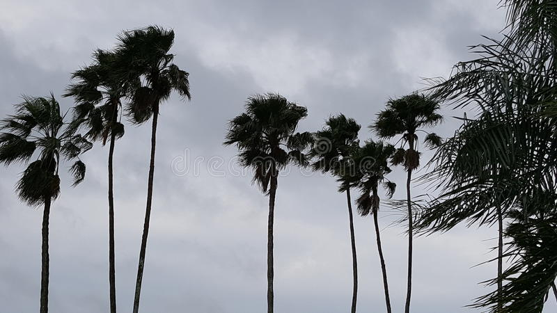 Tempestade das palmeiras fotografia de stock