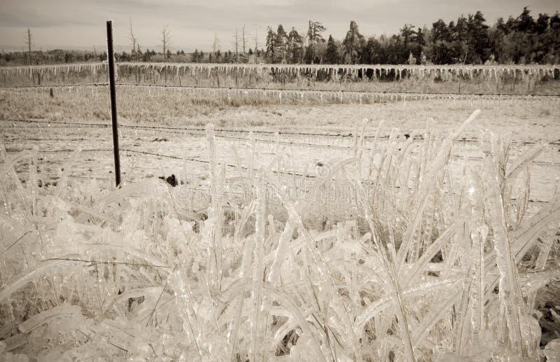 Tempestade de gelo fotos de stock