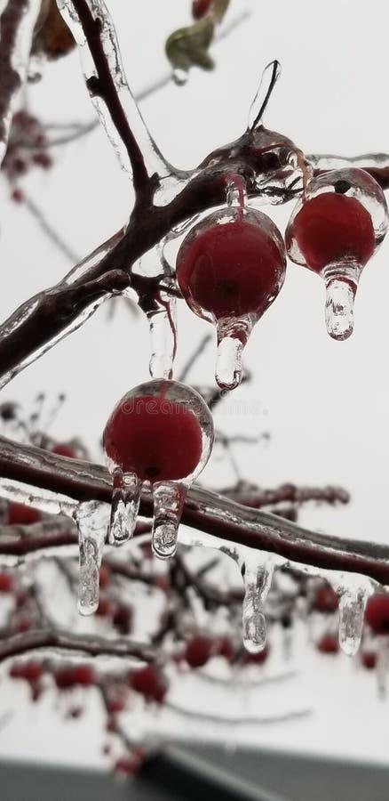Tempestade de gelo congelada do fruto imagens de stock