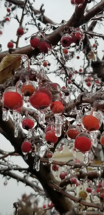 Tempestade de gelo congelada do fruto imagens de stock royalty free