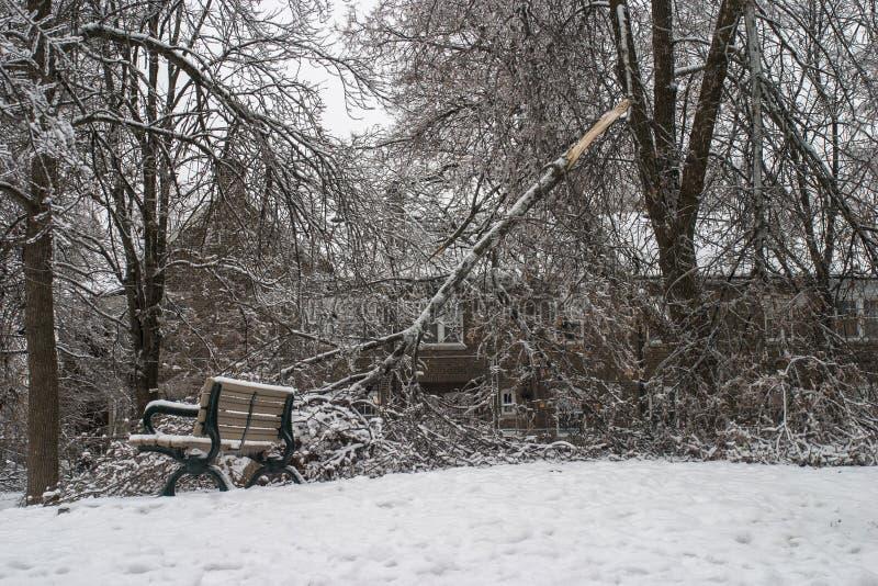 Tempestade de gelo de Toronto imagens de stock