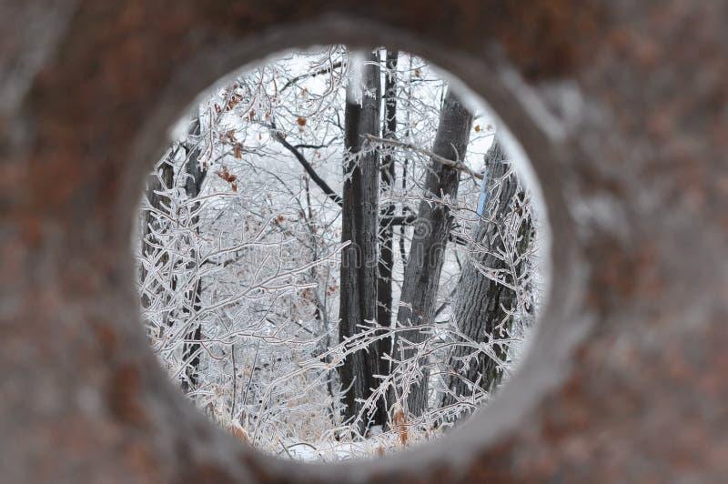 Tempestade de gelo do sul de Ontário - dezembro 22, 2013 foto de stock royalty free