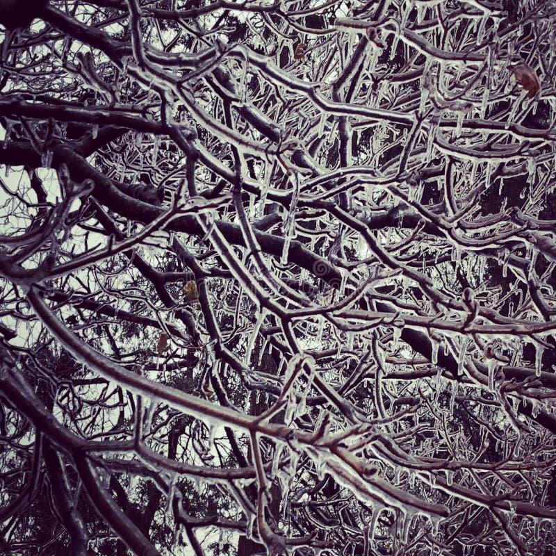 Tempestade de gelo gelada dos ramos de árvore imagens de stock