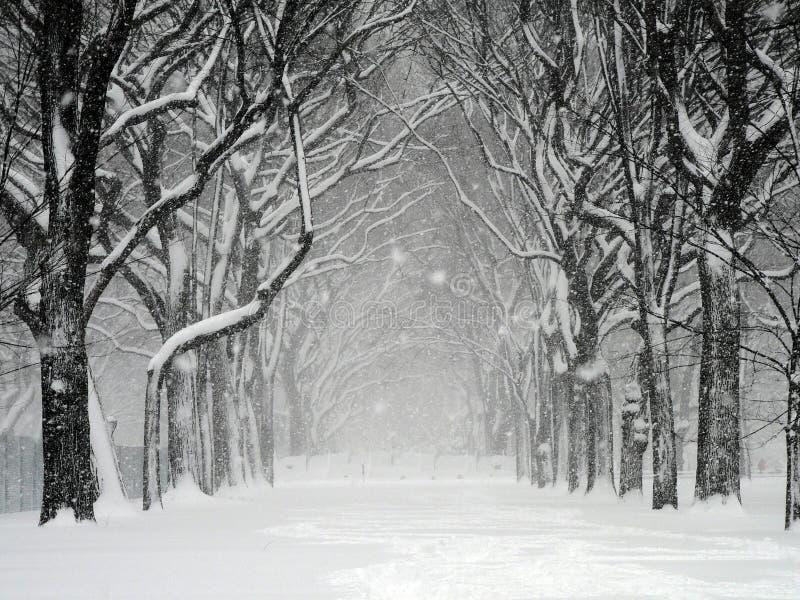 Tempestade de neve de Central Park fotos de stock royalty free