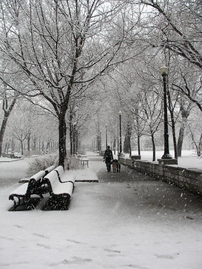 Tempestade de neve no parque em Montreal imagem de stock royalty free