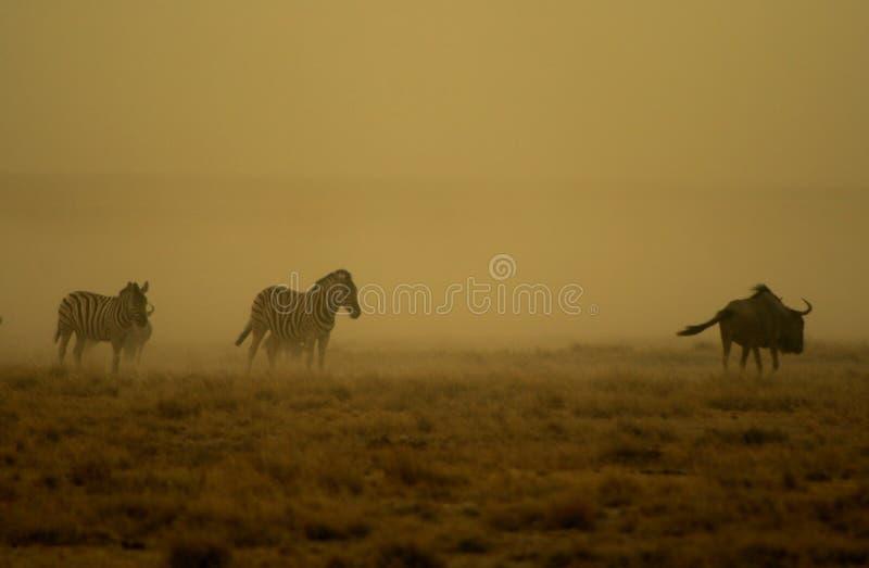 Tempestade de poeira de Etosha imagens de stock royalty free