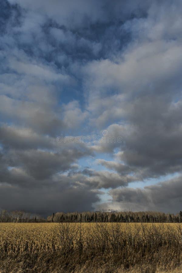 Tempestade do campo de milho foto de stock royalty free
