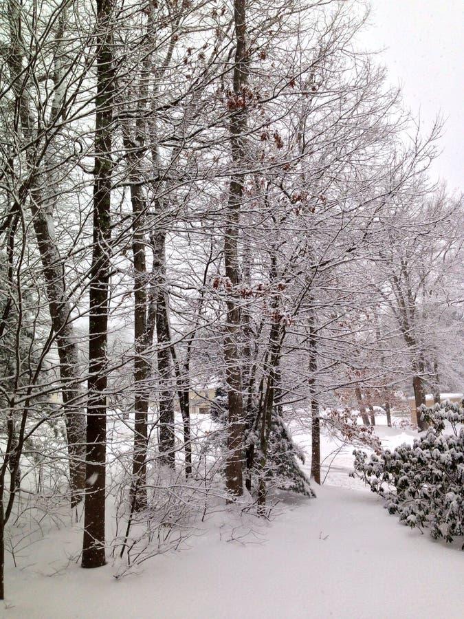 Tempestade do inverno fotos de stock