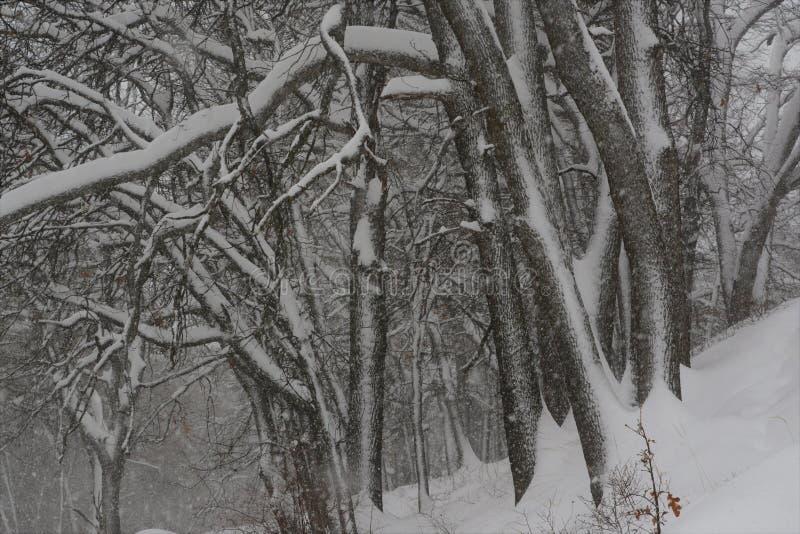 Tempestade do inverno nas madeiras imagem de stock