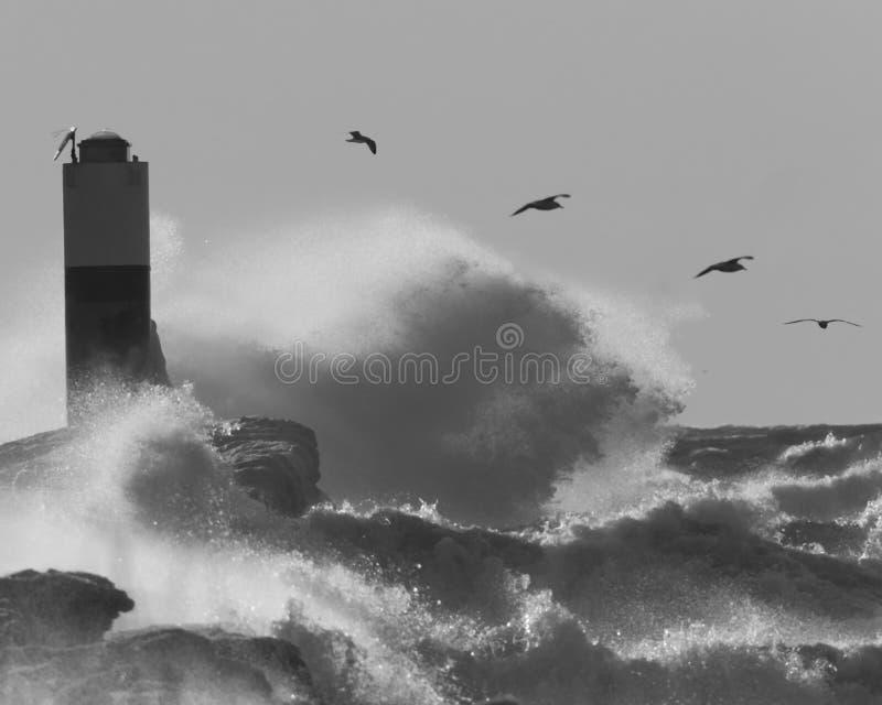 Tempestade do inverno no Lago Michigan com pássaros fotografia de stock royalty free